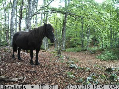 An image captured on camera traps featuring the wildlife of the Pyrenees.