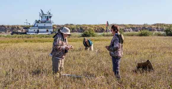 volunteers study whooping cranes in texas