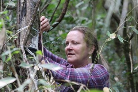volunteer takes measurements in cuban forest