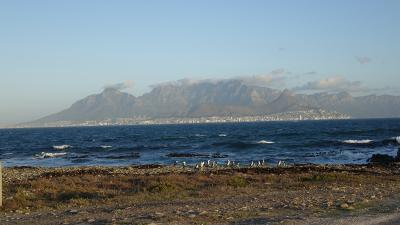 African penguins standing on the shores of Robben Island