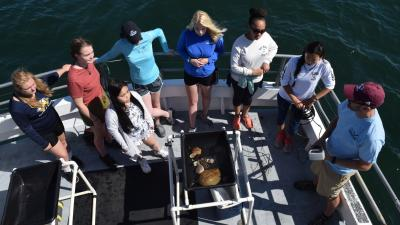 Girls in Science fellows on a boat, looking for whales (Courtesy WHOI)