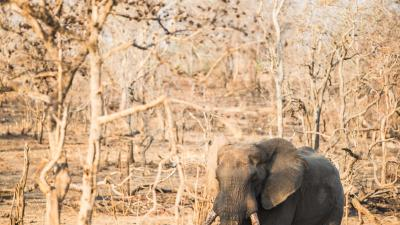 Animals of Malawi in the Majete Wildlife Reserve (credit Nico Wills)