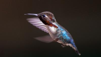 A humming bird in Cuba | Earthwatch