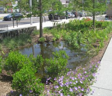 A rain garden in an urban area