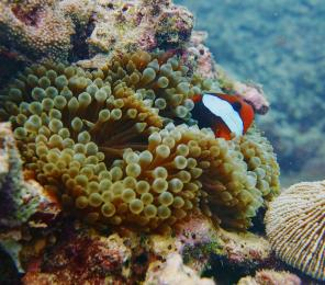 Coral reefs face a growing number of threats, from climate change and storm damage to sediment and nutrient run-off.