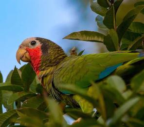 A brightly colored parrot in a tree