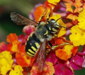 Earthwatch Expedition Cracking the Code: the Mysteries of Native Bees in Utah