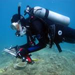 Earthwatch volunteers be scuba diving or snorkeling with researchers to actively removing algae and deploying coral recruitment (settlement) tiles.