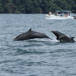 study dolphins off costa rica