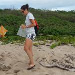 Earthwatch volunteers record the location of a leatherback sea turtle nest